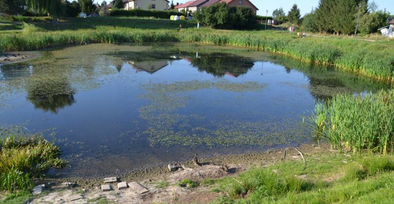 Woda do stawu popłynie ze źródełka przy Krzywoustego