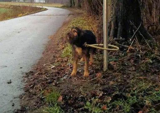 Przywiązał psa do słupa i zostawił na śmierć. Właściciel ustalony