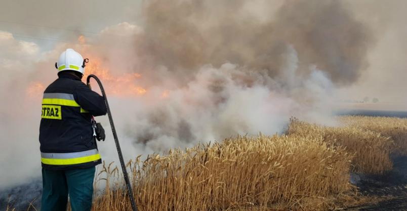 """Ogień zebrał """"żniwo"""" (FOTO)"""