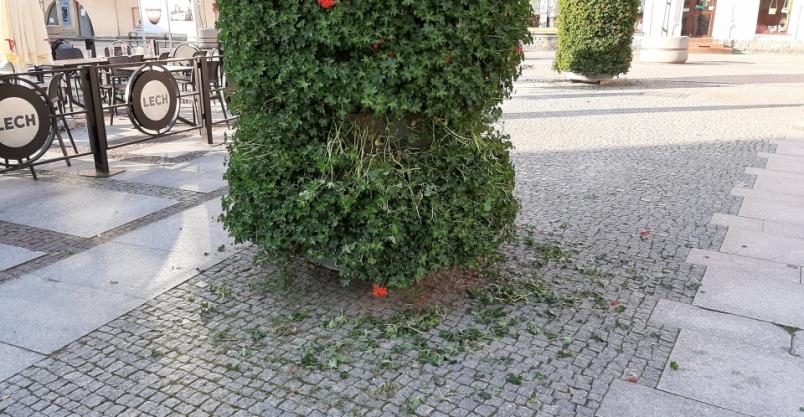 Dzieci niszczyły zieleń miejską, a przechodnie… patrzyli