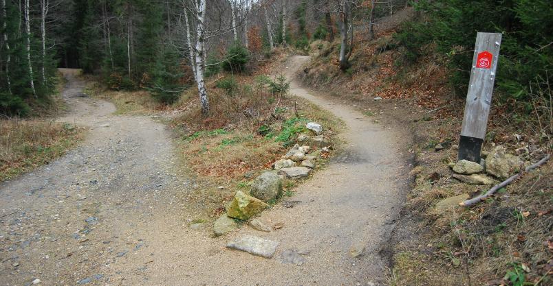 Singletrekami po Górach Kaczawskich już za rok – powstaje raj dla rowerzystów